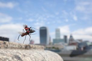 ant-man2bflying2b1b2b-2bblog